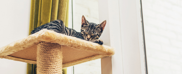 cat tree for large cat breeds